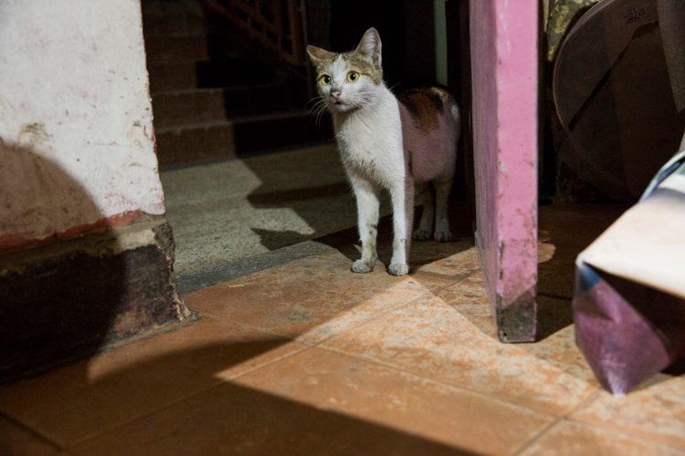 A cat at Dagoz